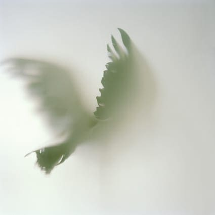 Lost Birds by Patricia VanAh - Artistic Photography - Weddings