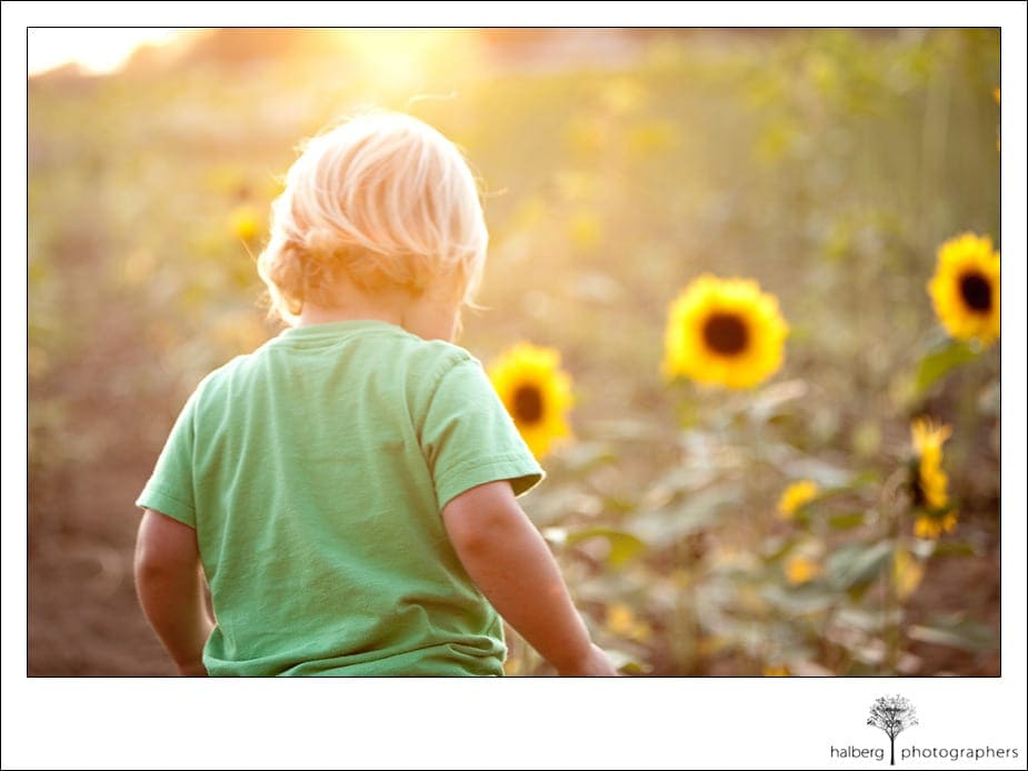portrait of child walking through sunflower field near santa barbara