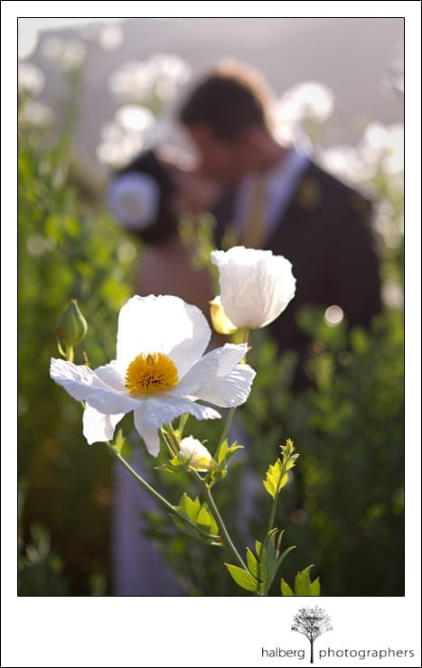 close up of white flower with bride and groom in background at their Elings Park Wedding