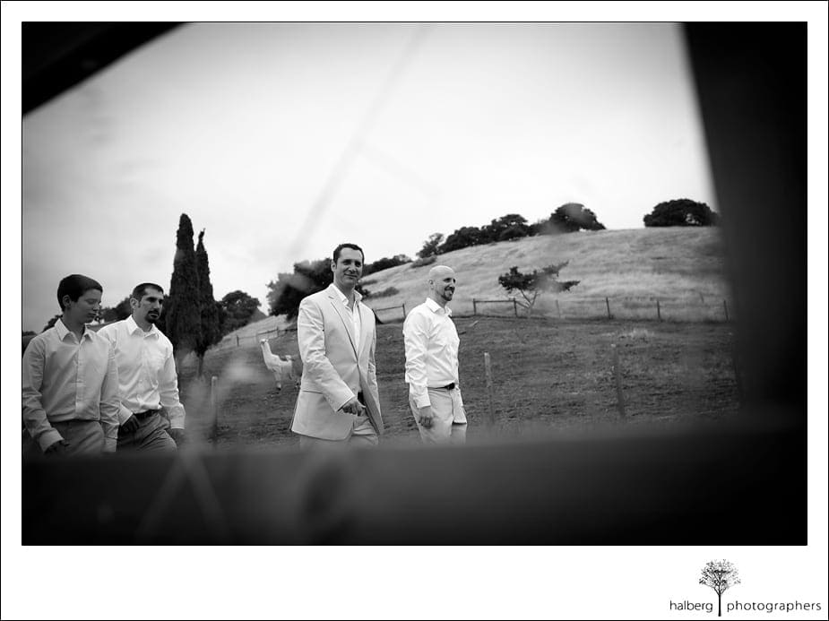 groom walking with groomsmen at his Nicholson Ranch Wedding