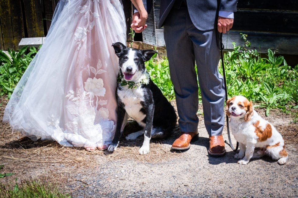 bride and groom with their dogs at griffith woods