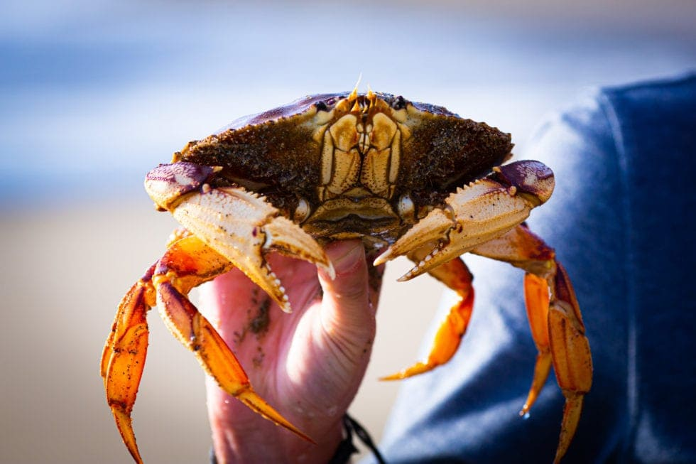 close up of man holding crab he caught